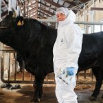 種雄牛を見に岐阜県畜産研究所にお邪魔してきました。