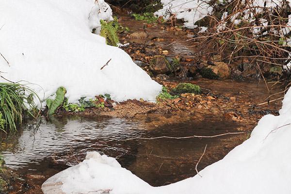 飛騨の湧き水